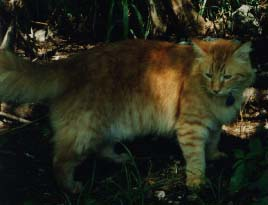 Photograph of Cat Calloway in the jungle.