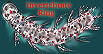 Aeolosoma - Invertebrate Ring logo