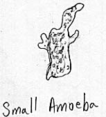 Sketch of a small naked amoeba