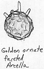 Golden, ornate, faceted arcella with pseudopods