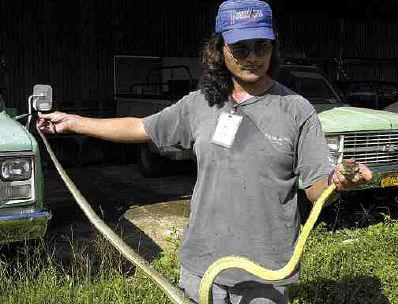 Photograph of John Quenga with brown tree snake, by staff of the Pacific Daily News.
