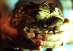 Photograph of Potpie the Toad.