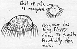 Sketch of a mysterious ciliate.