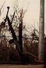 Thumbnail of utility pole snapped in half by the typhoon.